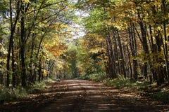 Fall road. Trees road dirt fall colors Royalty Free Stock Photo