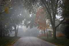 Fall road with trees in fog. Fall trees on quiet foggy suburban street in Toronto, Canada Stock Images