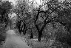 Fall road with trees. Which turned to the right side. Photo in black and wight Royalty Free Stock Photo