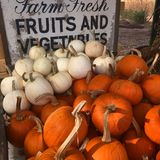 Fall at the Roadside Farm. A bin full of pumpkins note the arrival of fall in at a New England Roadside farm Royalty Free Stock Images