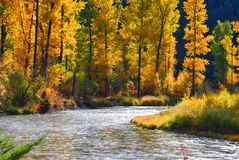 Fall on Rock Creek, Montana. Fall on Rock Creek Montana with firs, pines, and cottonwood trees stock images