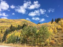 Fall in the Rockies. Sunny blue skies on a beautiful autumn afternoon. A few bright white clouds in the sky with yellow aspen tress on the ground with sparse Stock Photo