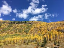 Fall in the Rockies. Sunny blue skies on a beautiful autumn afternoon. A few bright white clouds in the sky with yellow aspen tress on the ground with sparse Royalty Free Stock Images