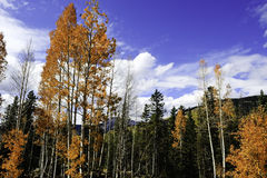 Fall in the rocky mountains Stock Photography