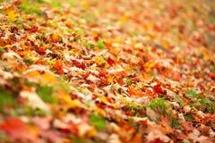 fall Säsong av året Gula sidor som ligger på lagen Hösten parkerar arkivbild