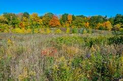 Fall& x27; s五颜六色的树 免版税库存照片