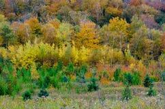 Fall& x27; s五颜六色的树 图库摄影