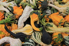 Fall& x27;s bounty in image of colorful,decorative gourds Royalty Free Stock Photography