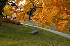 Colorful tree. Fall`s colorful tree in park. Toronto royalty free stock photography