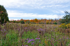 Fall's meadow Royalty Free Stock Photography