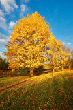 Fall-scape Royalty Free Stock Photography