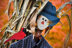 Fall Scarecrow and Cardinal. A scarecrow and his cardinal bird friend pose in front of corn stalks and Fall foliage royalty free stock photos