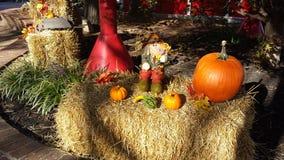 Fall scarecrow Stock Photos