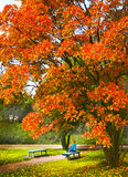 Fall sceen with poplar tree bench and girl Royalty Free Stock Image