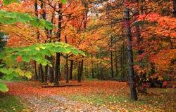 Fall scene stock image