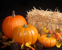 Fall scene on a black background. Three different size pumpkins, apples,pine cones and a bale of hay make this a perfect fall scene Royalty Free Stock Photos