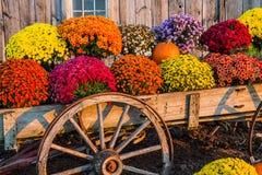 Fall scene royalty free stock photo