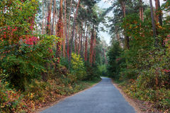 Road in the fall forest Stock Photos