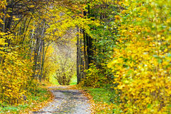 Fall scene on forest road Stock Photography