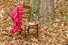 Fall scene with fruit Stock Image