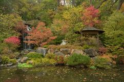 A Fall Scene in a Japanese Garden Stock Image