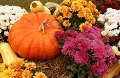 Fall Scene with pumpkin and flowers Royalty Free Stock Images