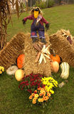Fall scene with pumpkins, gourds, mums, hay and a scarecrow Royalty Free Stock Photo