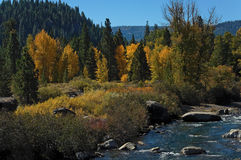 Fall scene on Truckee River royalty free stock photo