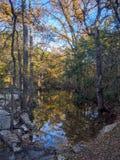Fall scene Royalty Free Stock Image