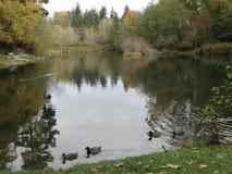 Fall scene in Whatcom Falls Park Stock Image