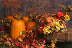 Free Fall Scene With Pumpkins And Colored Leaves Stock Image - 11260031