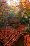 Fall scenery of a beautiful garden in Kyoto Japan, with view of a wooden arbor in the forest of fiery Japanese maple trees. & fallen leaves all over the garden Royalty Free Stock Image