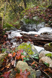 Fall scenery in forest with silky satin soft river flowing in long exposure Royalty Free Stock Images