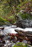 Fall scenery in forest with silky satin soft river flowing in long exposure Royalty Free Stock Photography