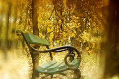 Autumn scenery in park. Autumn scenery with a bench and golden trees stock image