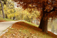 Autumn fall scenery in park. Autumn fall scenery with golden trees and a pathway stock photography