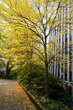 Fall scenery in the university campus. In Seattle Royalty Free Stock Photos