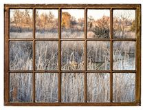fall scenery in wetlands in northern Colorado royalty free stock images