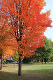 Fall season. Bright colors decorate some of the trees at a neighboring park Royalty Free Stock Photo