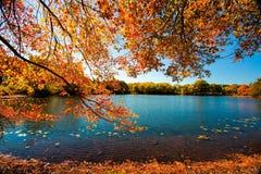 Fall Season stock photography