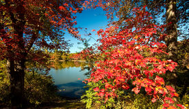 Fall Season Stock Photo
