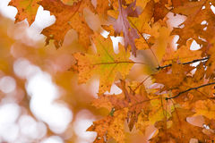 Fall Season Royalty Free Stock Photos
