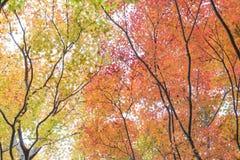 Fall Season Arashiyama Kyoto Japan. Arashiyama is Kyoto`s very popular tourist destination in Japan. People are coming from all over the world Stock Photo