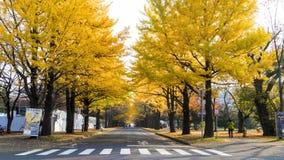 The fall season in the autumn Hokkaido University Stock Images