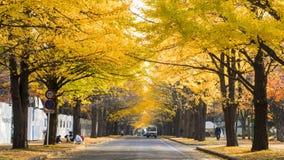 The fall season in the autumn Hokkaido University Stock Photos