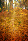 Fall season autumn park path abstract background vertical panorama Stock Photo
