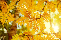 Fall season background Royalty Free Stock Image