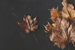 Fall season background, dried brown maple leaf royalty free stock photography