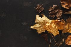 Fall season background, dried brown and yellow maple leaves stock photography