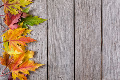 Fall season background, yellow maple leaves Royalty Free Stock Image